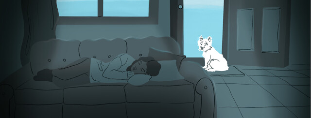 A woman sleeps on the couch while a dog waits at the door to go outside.